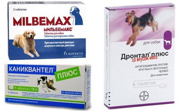 Как глистогонить кошку –способы введения препаратов, советы и рекомендации