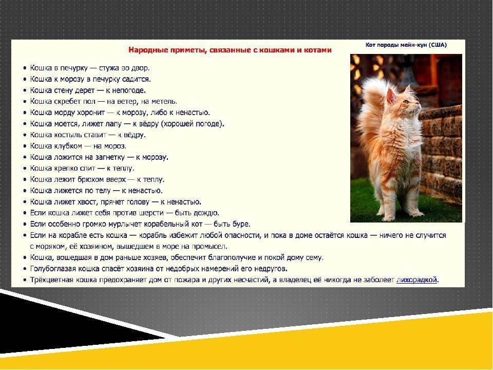 Белые и пушистые: приметы о котах и кошках