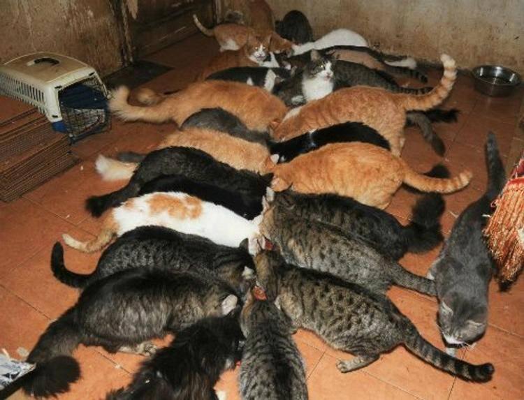 Сколько дней гуляет кошка   как долго, первый раз, при течке