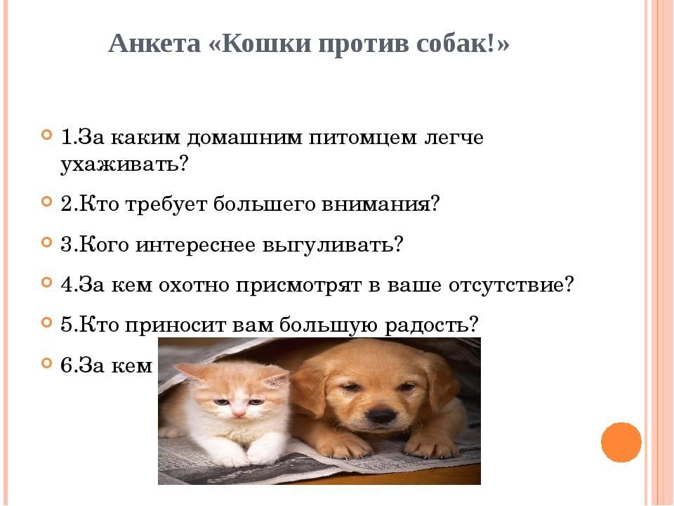 Как правильно познакомить кошку и собаку – маленьких или взрослых – и подружить их, если они живут в одной квартире?