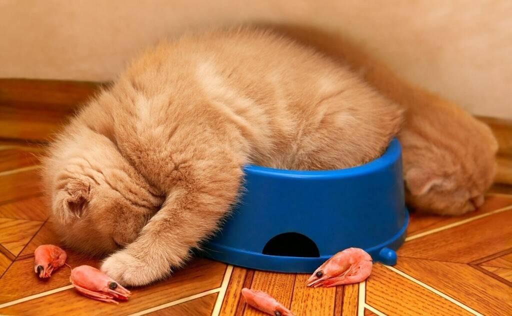 Почему кошка закапывает миску с едой лапой