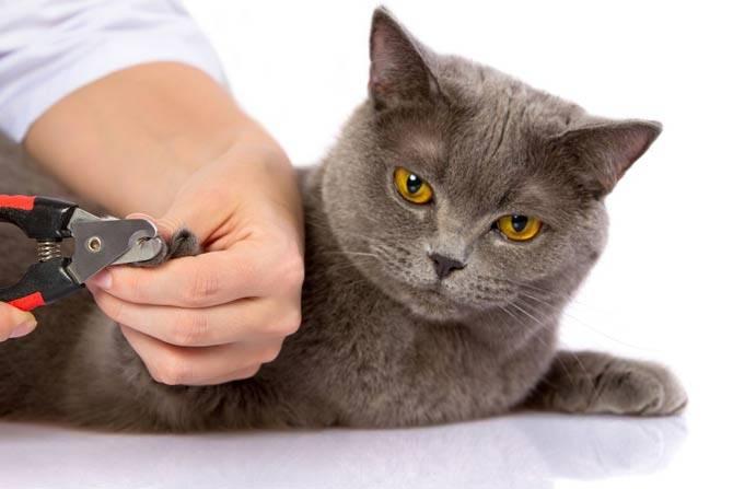 Удаление когтей у кошек: факты, аргументы, осложнения, альтернативы