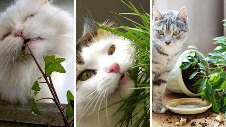 Что делать, если кошка ест цветы