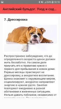 Уход за французским бульдогом и содержание щенка