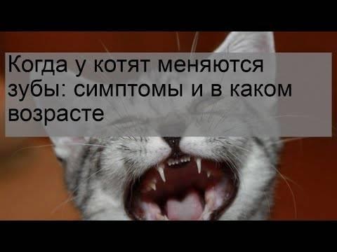 Смена зубов у котят: когда меняются молочные зубы