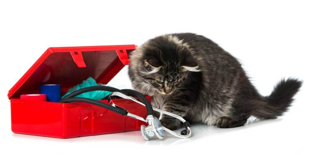 Ветеринарная аптечка для собак