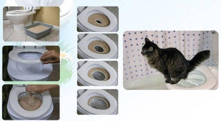 Как котенка приучить к туалету: быстро и просто