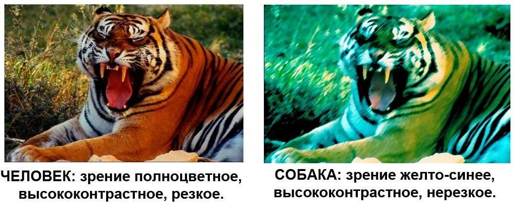 Как видят кошки цвета и людей? ответы эксперта
