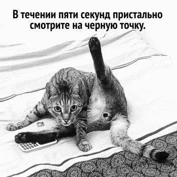 Почему кот смотрит в одну точку почему кот смотрит в одну точку