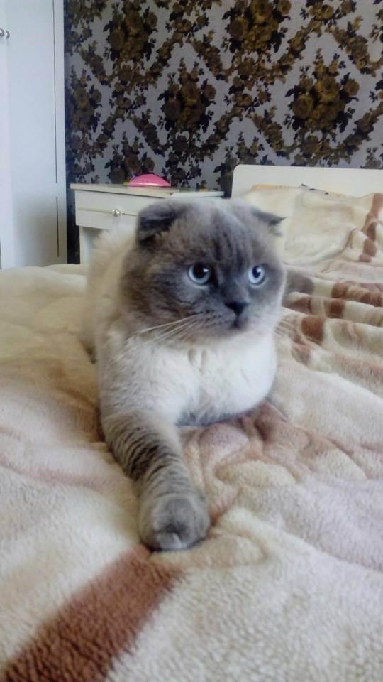 Кошка храпит. может быть у нее брахицефальный синдром?