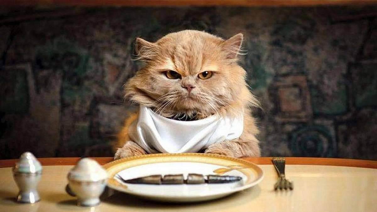 Зачем кошкам таурин | мои домашние питомцы