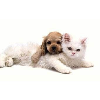 Какие породы собак хорошо уживаются и ладят с кошками