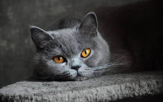 Питание кошек: кормящих, кастрированных, британских и котят