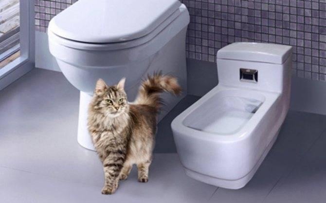 Биотуалет для кошки - подробное описание принципа действия и советы по выбору лучшей модели 2020 года