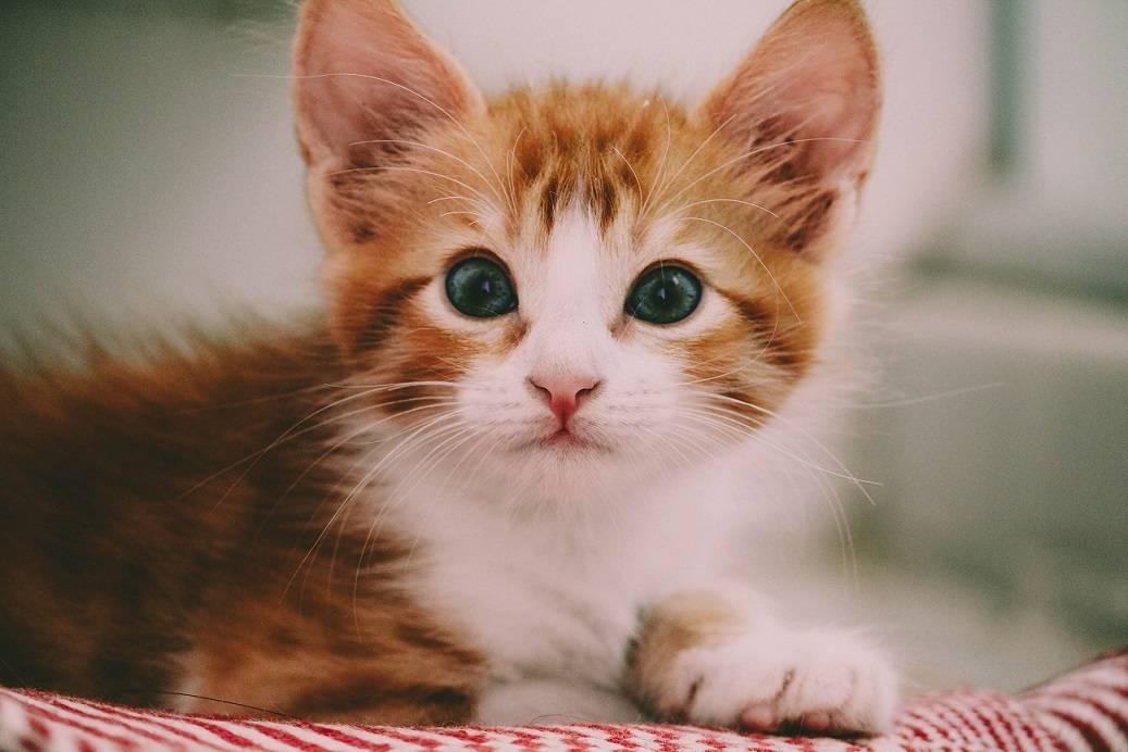Как помыть кота, если он боится воды: полезные советы. как помыть кошку? как быстро высушить кошку после купания