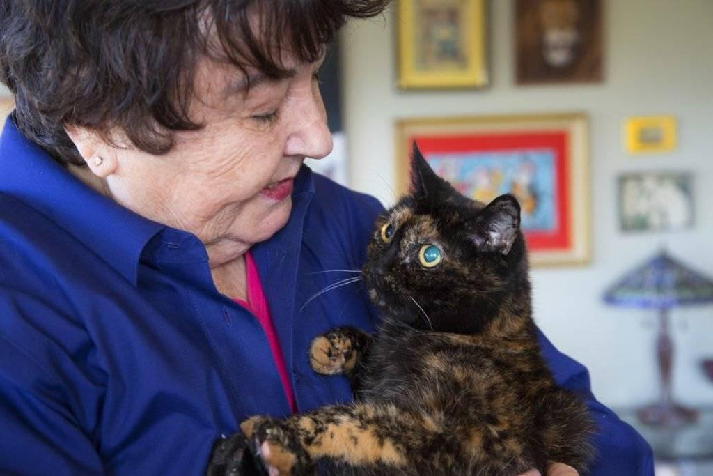 Самый старый кот в мире и кошка-долгожитель: сколько прожили питомцы, каких они были пород?