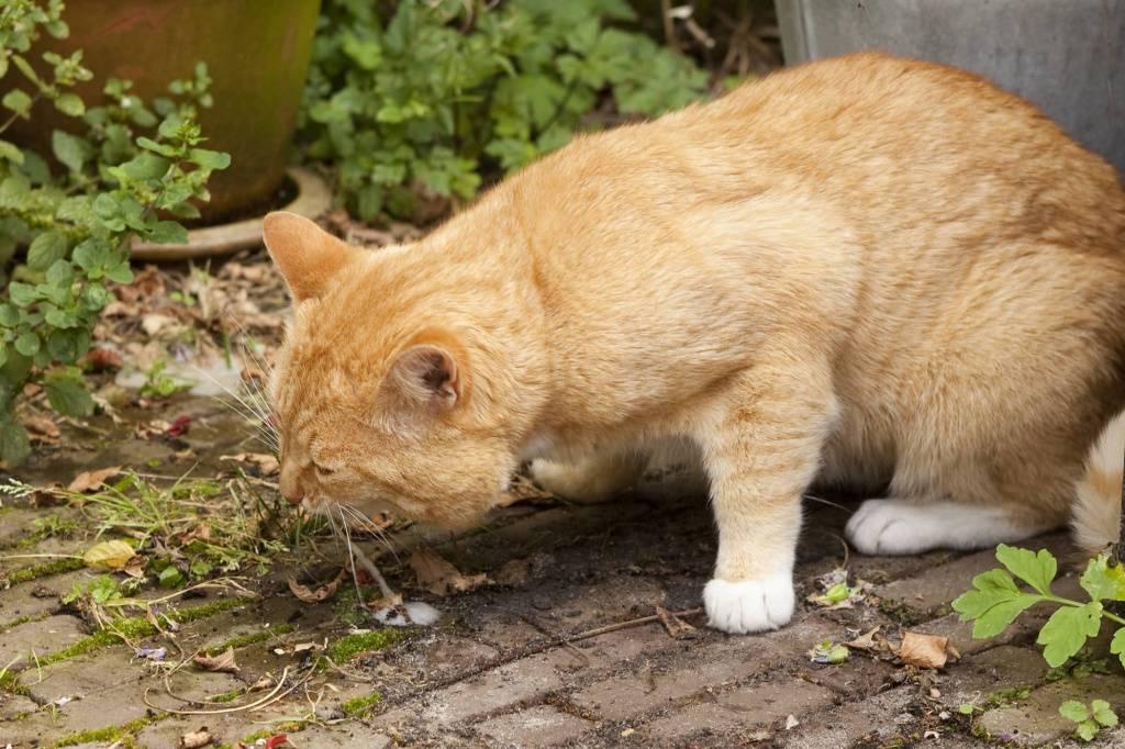 Кот вялый, сонный, отказывается от еды – пора ли бежать к ветеринару?