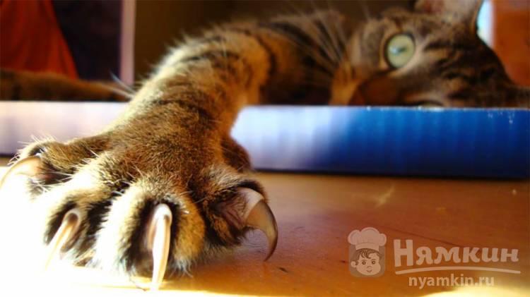 Причины укусов кота за ногу своей хозяйки: что это значит и что делать