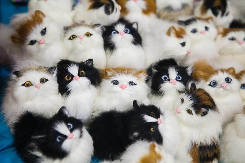 Выставки кошек: зачем нужны и стоит ли принимать участие | домашние хитрости