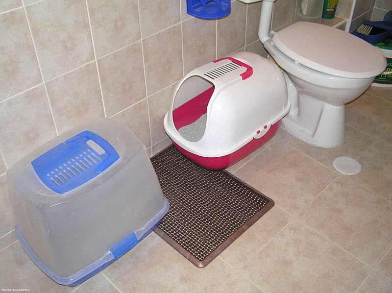 Лоток для мейн-куна: выбор большого туалета для кошек, размеры лотков. как приучить к лотку котенка?