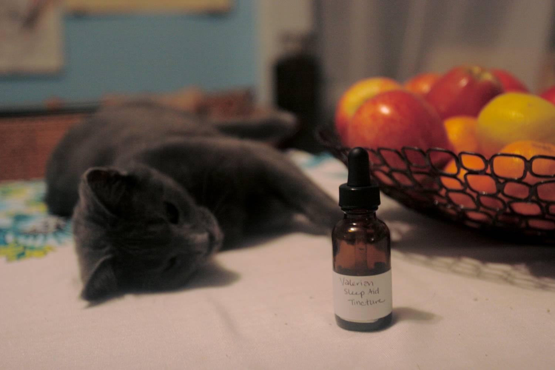 Почему кошки любят валерьянку: полезна ли она