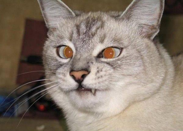 Кошка постоянно смотрит на меня. почему моя кошка смотрит на меня? почему нельзя смотреть кошке в глаза