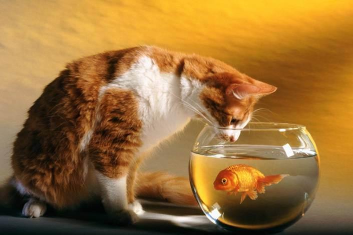 Есть или не есть? нужны ли в кошачьем рационе кости?