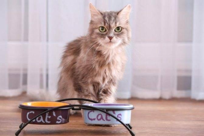 Что делать если кошка упала с высоты | кот и кошка