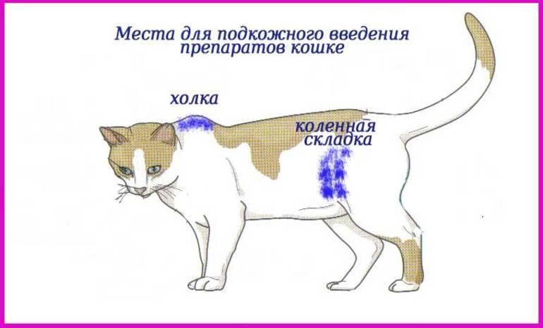 Глюкоза для котов при отравлении