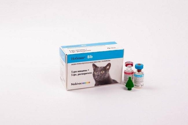 Вакцина «нобивак» для кошек и котов: инструкция, цена, отзывы