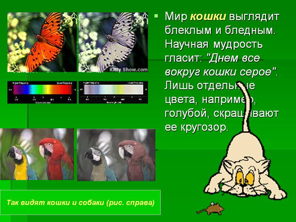 Какие цвета видят кошки и как они смотрят на мир - досуг - животные на joinfo.com