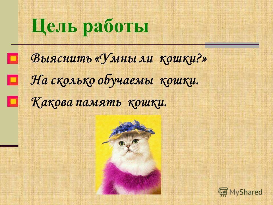 Память у кошек - долговременная и кратковременная. сколько длится, память кошек на людей. - petstime.ru