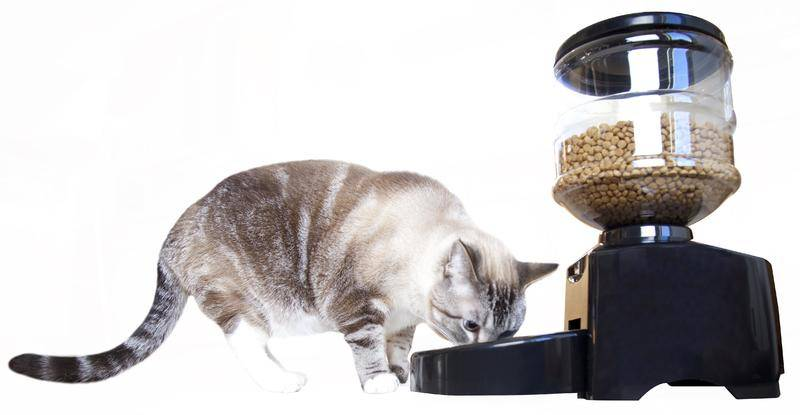 Рейтинг автоматических кормушек для кошек