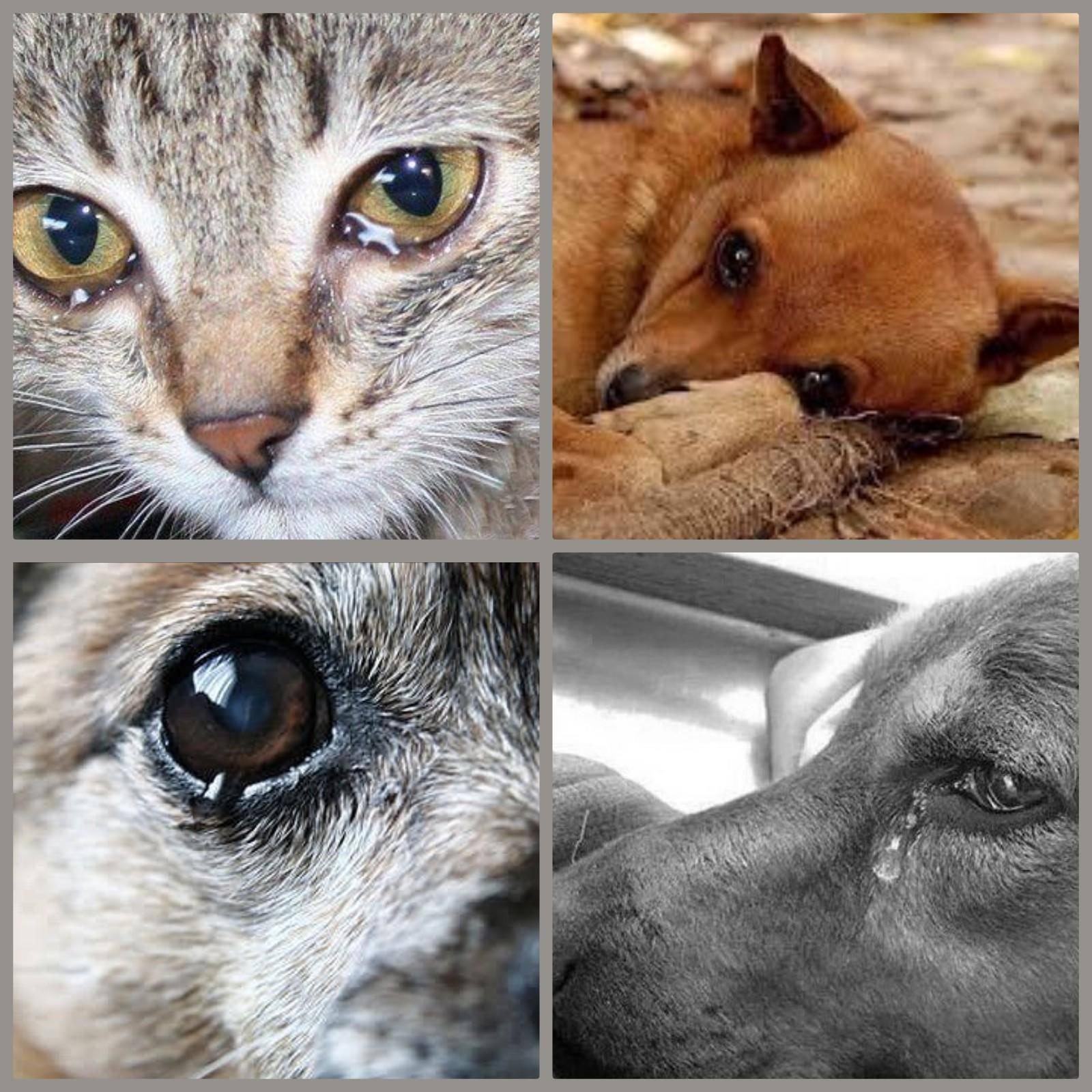 Плачут ли коты? что нужно знать о плачущем питомце (часть 1) - твойпитомец