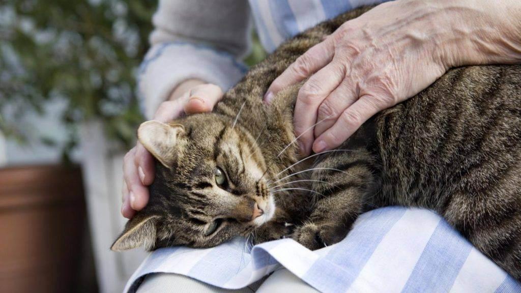 Как понять что кошка умирает: признаки, что делать