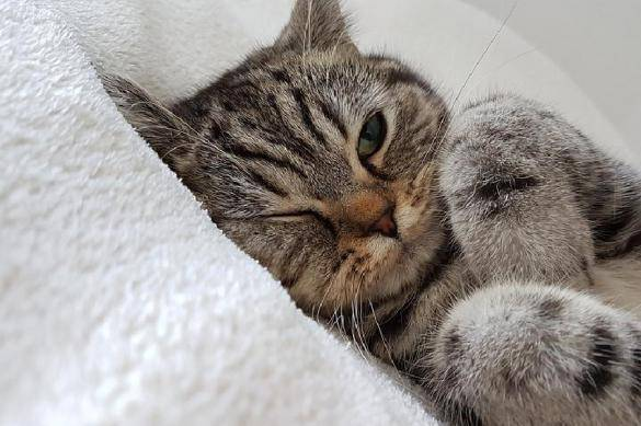 Самые спокойные породы кошек: описание послушных котов для квартиры. как выбрать кошку?