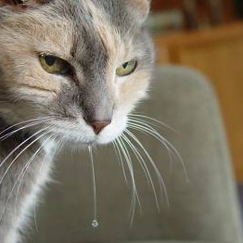 Почему у кошки текут слюни изо рта?