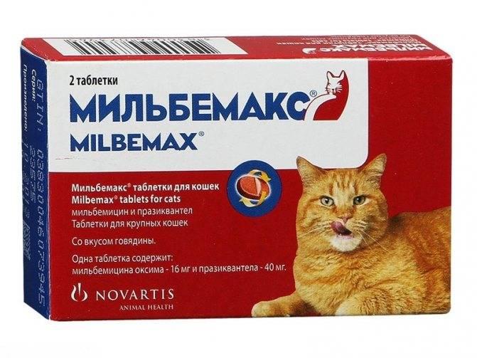 Чем лечат аллергию у кошек в домашних условиях: антигистаминные препараты, дозировка для котят и взрослых животных