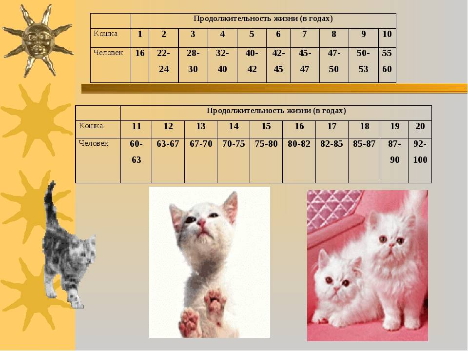 Сколько живут беспородные кошки в домашних условиях?