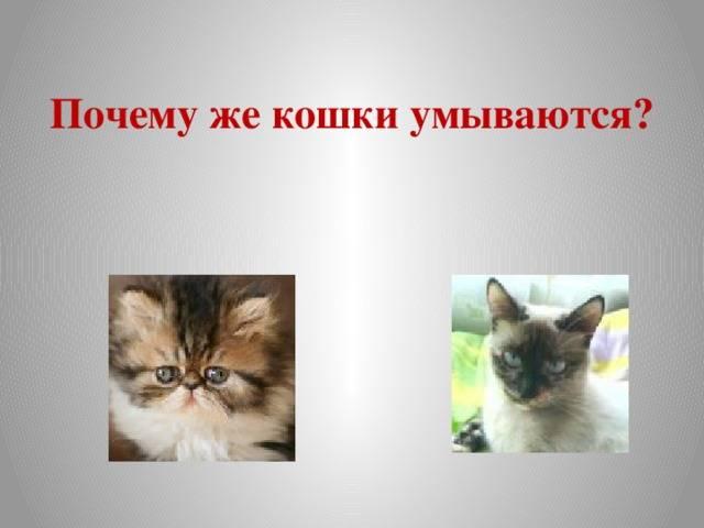 Почему кошка умывается   все о кошках