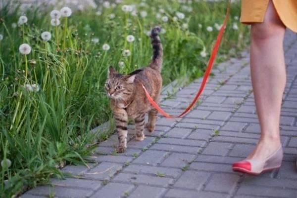 Как понять, что кот просит кошку: первые симптомы, изменение поведения