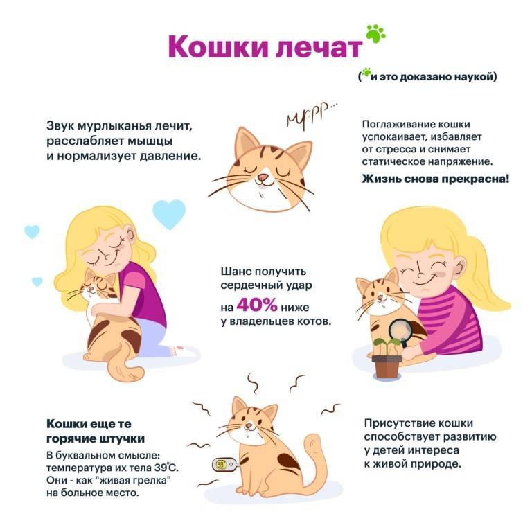 Фелинотерапия:  лечение кошками от заболеваний человека