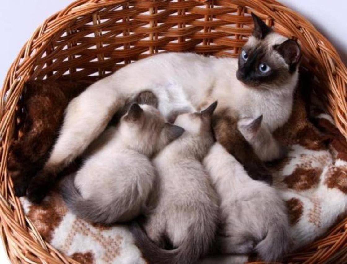 К чему снится кошка с котятами: выбор сонника, значение и толкование сна
