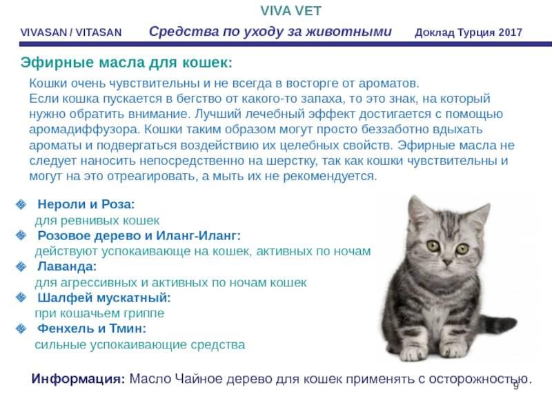 Как успокоить и удержать кошку во время проведения лечебных процедур