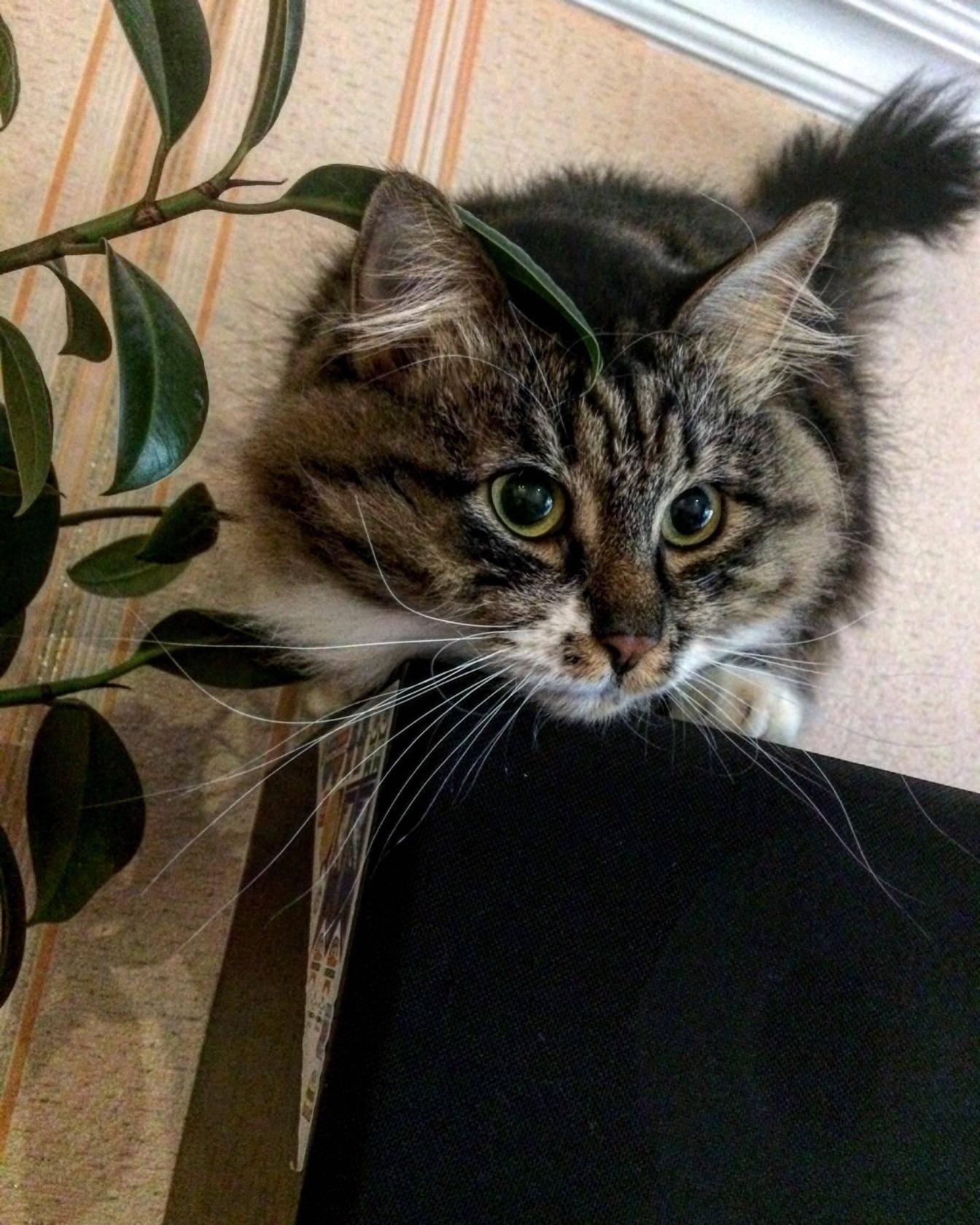 Признаки боли у кошек   ветеринарная клиника «соколиная гора»