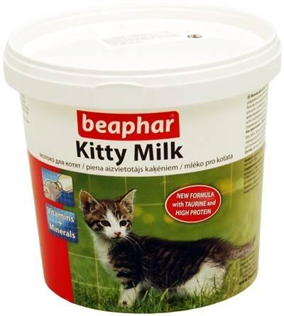 Как и чем кормить недельного котёнка: правила и рекомендации