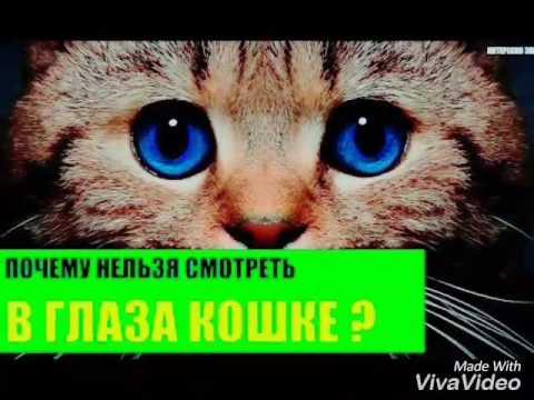 Так почему же нельзя смотреть кошке в глаза? мистические и научные объяснения (6 фото)