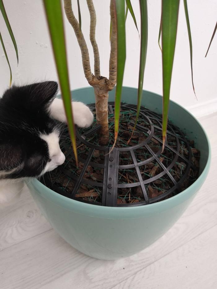 """Как спасти любимые растения от домашнего кота? - """"дизайн и благоустройство"""" :: читать на сайте leplants.ru"""
