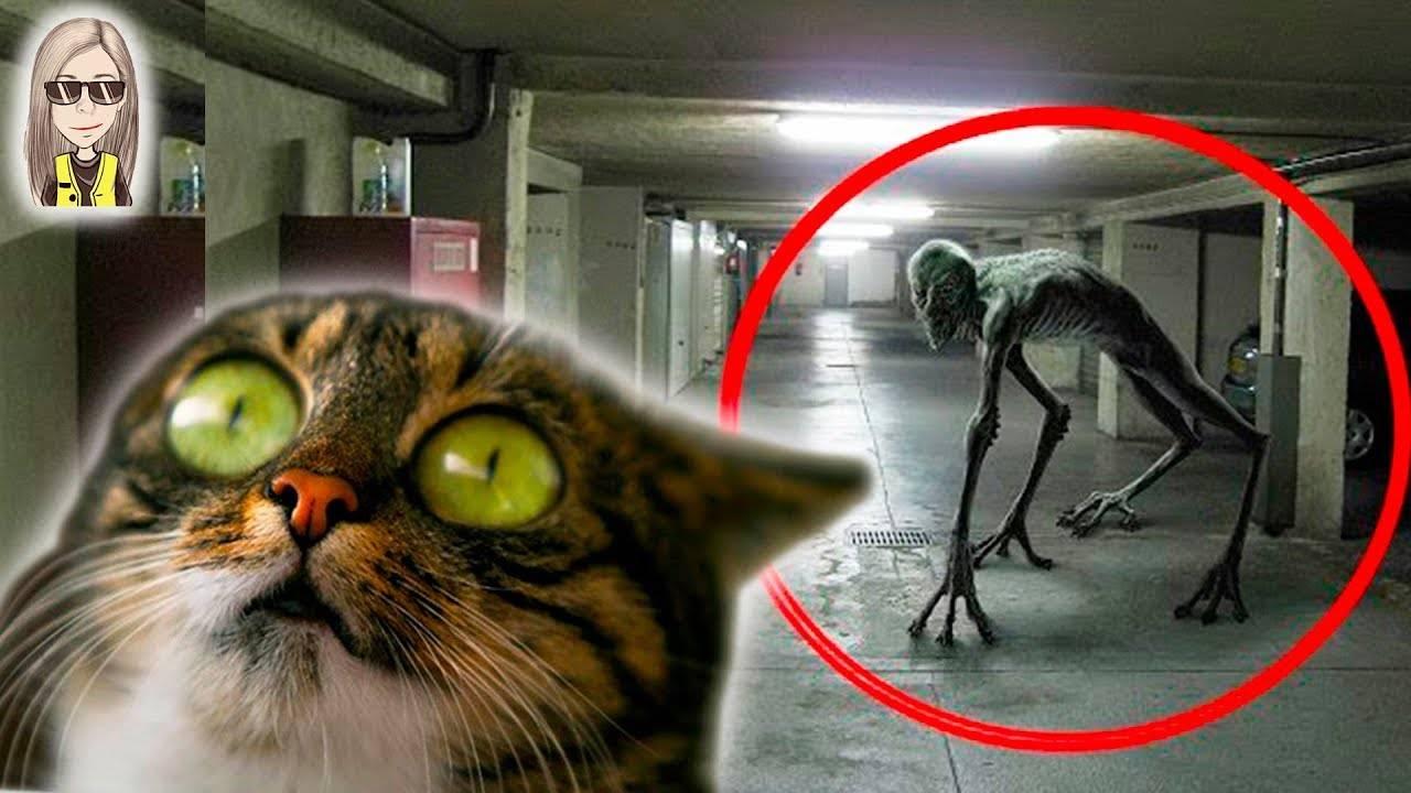 Могут ли коты видеть душу умершего: мистические способности