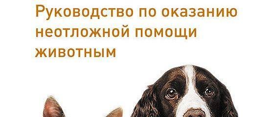 Неотложные состояния собак. первая помощь по пути к ветеринару - новости ветеринарной клиники «центр»